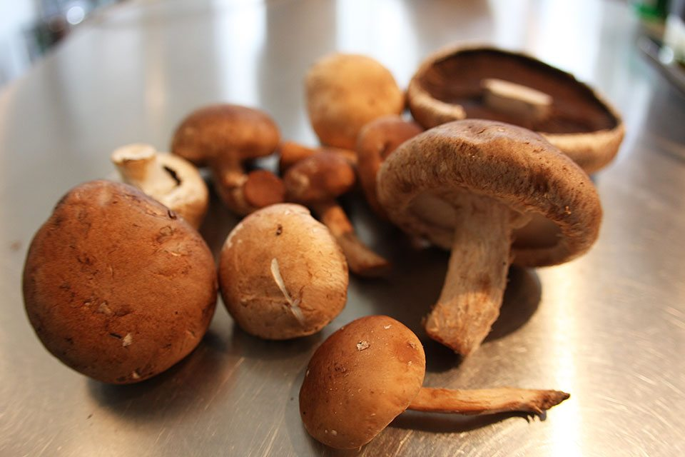 Mushrooms | Nomad with Cookies