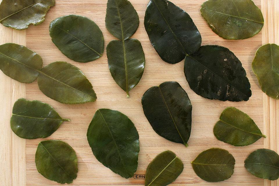 Kaffir lime leaves for lemonade
